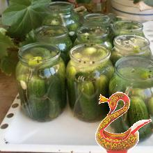 Pickling cucumbers for the winter