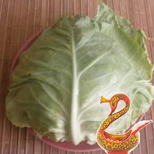 Delicious cabbage rolls recipe with a photo